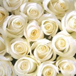 Wedding white roses